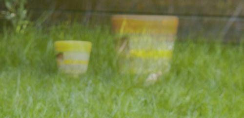 Gele potten naast elkaar